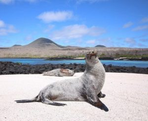 ★ LOBO MARINO EN GALÁPAGOS  By : @daysienjoyandlove  #Galapagos #DiscoverEcuador #EcuadorPotenciaTuristica #EcuadorIsAllyouNeed #EcuadorTuristico #EcuadorAmaLavida #EcuadorPrimero #Ecuador #SoClose #LikeNoWhereElse #ViajaPrimeroEcuador #AllInOnePlace #AllYouNeedIsEcuador #PaisajesEcuador #PaisajesEcuador593 #FeelAgainInEcuador #Love #Nature_Wizards #Nature_Perfections #Wow_America #World_Shots #WorldCaptures