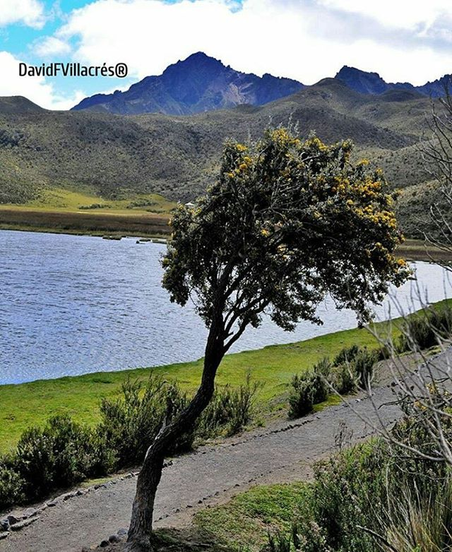 ★ LAGUNA DE LIMPIOPUNGO – COTOPAXI  By : @davidfvillacres  #Limpiopungo #ProvinciaDeCotopaxi #DiscoverEcuador #EcuadorPotenciaTuristica #EcuadorIsAllyouNeed #EcuadorTuristico #EcuadorAmaLavida #EcuadorPrimero #Ecuador #SoClose #LikeNoWhereElse #ViajaPrimeroEcuador #AllInOnePlace #AllYouNeedIsEcuador #PaisajesEcuador #PaisajesEcuador593 #FeelAgainInEcuador #Love #Nature_Wizards #Nature_Perfections #Wow_America #World_Shots #WorldCaptures