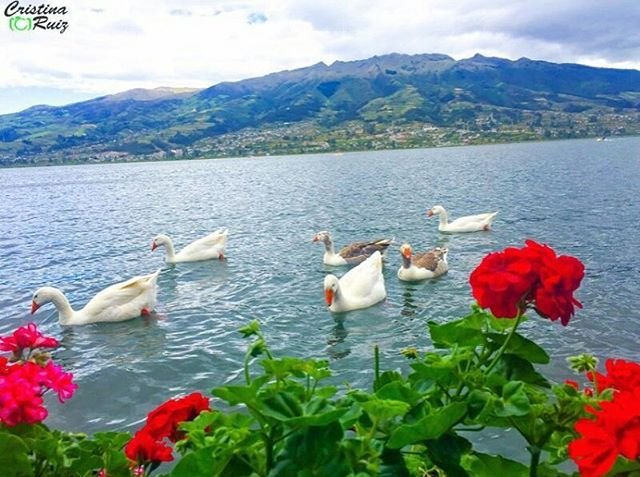 ★ LAGO SAN PABLO – IMBABURA  By : @chisale26  #LagoSanPablo #ProvinciaDeImbabura #DiscoverEcuador #EcuadorPotenciaTuristica #EcuadorIsAllyouNeed #EcuadorTuristico #EcuadorAmaLavida #EcuadorPrimero #Ecuador #SoClose #LikeNoWhereElse #ViajaPrimeroEcuador #AllInOnePlace #AllYouNeedIsEcuador #PaisajesEcuador #PaisajesEcuador593 #FeelAgainInEcuador #Love #Nature_Wizards #Nature_Perfections #Wow_America #World_Shots #WorldCaptures