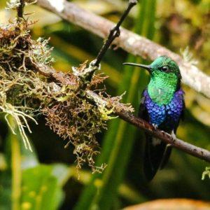 ★ Colibrí #hummingbird #nofilters  #pictureofday  #ecuadoramalavida #DiscoverEcuador #EcuadorPotenciaTuristica #EcuadorIsAllyouNeed #EcuadorTuristico #EcuadorAmaLavida #EcuadorPrimero #Ecuador  #LikeNoWhereElse #ViajaPrimeroEcuador #AllInOnePlace #AllYouNeedIsEcuador #PaisajesEcuador #PaisajesEcuador593 #FeelAgainInEcuador #Love #Nature_Wizards #Nature_Perfections  #WorldCaptures #lovenature  #birds  #birdsofinstagram