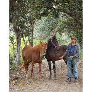 ★ Cabalgata El placer de recorrer los campos de Gonzabal en caballos de paso.
