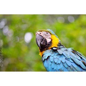 ★ #cronicasdeunviandante #discoverecuador #discoversouthamerica #bird #ecuador #ecuadoramalavida #ecuadorpotenciaturistica #ecuadorturistico #allinoneplace #likenowhereelse #soclose #allyouneedisecuador #ecuadorisallyouneed #iamnikon #nikon #nikon_photography_ #nikonphotography #nuevalojaecuador #nuevaloja #lagoagrio #provinciasucumbios