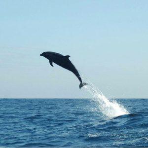 ★ DELFIN EN GALÁPAGOS  By : @xromerosubmar  #Delfin #Galápagos #DiscoverEcuador #EcuadorPotenciaTuristica #EcuadorIsAllyouNeed #EcuadorTuristico #EcuadorAmaLavida #EcuadorPrimero #Ecuador #SoClose #LikeNoWhereElse #ViajaPrimeroEcuador #AllInOnePlace #AllYouNeedIsEcuador #PaisajesEcuador #PaisajesEcuador593 #FeelAgainInEcuador #Love #Nature_Wizards #Nature_Perfections #Wow_America #World_Shots #WorldCaptures