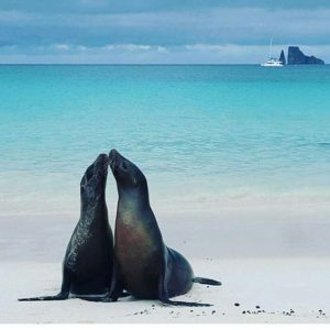★ ISLAS GALÁPAGOS  By : @tambulero  #Galápagos #DiscoverEcuador #EcuadorPotenciaTuristica #EcuadorIsAllyouNeed #EcuadorTuristico #EcuadorAmaLavida #EcuadorPrimero #Ecuador #SoClose #LikeNoWhereElse #ViajaPrimeroEcuador #AllInOnePlace #AllYouNeedIsEcuador #PaisajesEcuador #PaisajesEcuador593 #FeelAgainInEcuador #Love #Nature_Wizards #Nature_Perfections #Wow_America #World_Shots #WorldCaptures