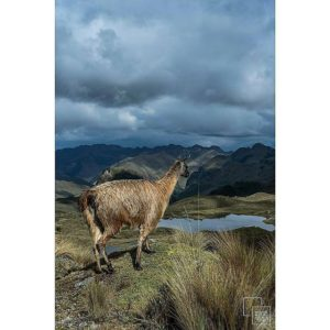 ★ #ParqueNacionalCajas Photo: @amazingecuadorphotography Vive tu mejor #aventura con la #FamiliaViajeraEcuador#Rutaviva.  www.rutaviva.com_____________________________________________ #ViajaPrimeroEcuador #EcuadorNow  #Ecuador  #allyouneedisecuador #travelblogger#mochileros #natgeotravel #blogger #adventure #amor  #fotografias #fotosespectaculares  #Instapic #instatravel #instagramers #instameet #primerolacomunidad #instameetecuador#familiaviajera #igersecuador #ecoturismo @instagrames #wwim13@falvaradoe