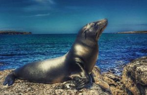 ★ LOBO MARINO – GALÁPAGOS  By : @xrapper  #Galápagos #DiscoverEcuador #EcuadorPotenciaTuristica #EcuadorIsAllyouNeed #EcuadorTuristico #EcuadorAmaLavida #EcuadorPrimero #Ecuador #SoClose #LikeNoWhereElse #ViajaPrimeroEcuador #AllInOnePlace #AllYouNeedIsEcuador #PaisajesEcuador #PaisajesEcuador593 #FeelAgainInEcuador #Love #Nature_Wizards #Nature_Perfections #Wow_America #World_Shots #WorldCaptures