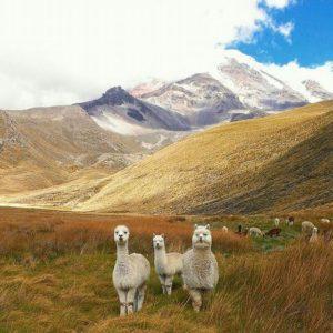 ★ CHIMBORAZO  By : @c_a_f  #Chimborazo #ProvinciaDeChimborazo #DiscoverEcuador #EcuadorPotenciaTuristica #EcuadorIsAllyouNeed #EcuadorTuristico #EcuadorAmaLavida #EcuadorPrimero #Ecuador #SoClose #LikeNoWhereElse #ViajaPrimeroEcuador #AllInOnePlace #AllYouNeedIsEcuador #PaisajesEcuador #PaisajesEcuador593 #FeelAgainInEcuador #Love #Nature_Wizards #Nature_Perfections #Wow_America #World_Shots #WorldCaptures