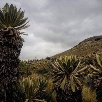 ★ RESERVA ECOLÓGICA EL ANGEL – CARCHI  By : @luisreamoreno  #ReservaEcologicaElAngel #ProvinciaDeCarchi #DiscoverEcuador #EcuadorPotenciaTuristica #EcuadorIsAllyouNeed #EcuadorTuristico #EcuadorAmaLavida #EcuadorPrimero #Ecuador #SoClose #LikeNoWhereElse #ViajaPrimeroEcuador #AllInOnePlace #AllYouNeedIsEcuador #PaisajesEcuador #PaisajesEcuador593 #FeelAgainInEcuador #Love #Nature_Wizards #Nature_Perfections #Wow_America #World_Shots #WorldCaptures
