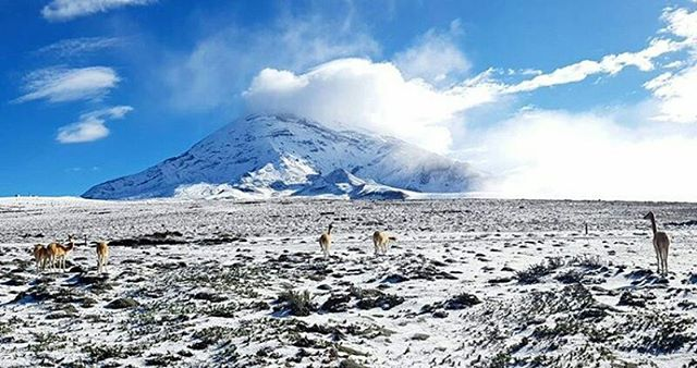 ★ CHIMBORAZO  By : @moncayo1  #Chimborazo #ProvinciaDeChimborazo #DiscoverEcuador #EcuadorPotenciaTuristica #EcuadorIsAllyouNeed #EcuadorTuristico #EcuadorAmaLavida #EcuadorPrimero #Ecuador #SoClose #LikeNoWhereElse #ViajaPrimeroEcuador #AllInOnePlace #AllYouNeedIsEcuador #PaisajesEcuador #PaisajesEcuador593 #FeelAgainInEcuador #Love #Nature_Wizards #Nature_Perfections #Wow_America #World_Shots #WorldCaptures