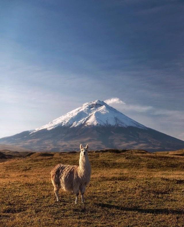 ★ PARQUE NACIONAL COTOPAXI  By : @nickrlake  #Cotopaxi #ProvinciaDeCotopaxi #DiscoverEcuador #EcuadorPotenciaTuristica #EcuadorTuristico #EcuadorAmaLavida #EcuadorPrimero #Ecuador #SoClose #LikeNoWhereElse #ViajaPrimeroEcuador #AllInOnePlace #AllYouNeedIsEcuador #PaisajesEcuador #PaisajesEcuador593 #FeelAgainInEcuador #Love #Nature_Wizards #Nature_Perfections #Wow_America #World_Shots #WorldCaptures