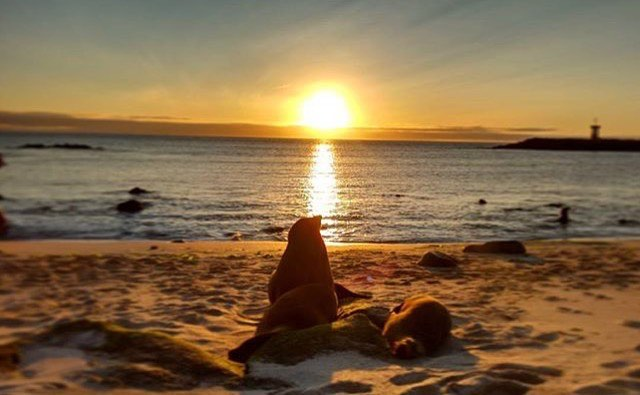 ★ PUNTA CAROLA – GALÁPAGOS  By : @alemanjuandavid  #PuntaCarola #Galápagos #DiscoverEcuador #EcuadorPotenciaTuristica #EcuadorIsAllyouNeed #EcuadorTuristico #EcuadorAmaLavida #EcuadorPrimero #Ecuador #SoClose #LikeNoWhereElse #ViajaPrimeroEcuador #AllInOnePlace #AllYouNeedIsEcuador #PaisajesEcuador #PaisajesEcuador593 #FeelAgainInEcuador #Love #Nature_Wizards #Nature_Perfections #Wow_America #World_Shots #WorldCaptures
