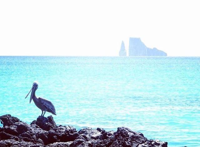★ ISLAS GALÁPAGOS  By : @lauranic25  #Galapagos #DiscoverEcuador #EcuadorPotenciaTuristica #EcuadorIsAllyouNeed #EcuadorTuristico #EcuadorAmaLavida #EcuadorPrimero #Ecuador #SoClose #LikeNoWhereElse #ViajaPrimeroEcuador #AllInOnePlace #AllYouNeedIsEcuador #PaisajesEcuador #PaisajesEcuador593 #FeelAgainInEcuador #Love #Nature_Wizards #Nature_Perfections #Wow_America #World_Shots #WorldCaptures