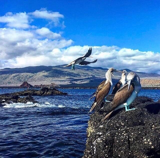 ★ ISLAS GALÁPAGOS  By : @froliq  #Galápagos #DiscoverEcuador #EcuadorPotenciaTuristica #EcuadorIsAllyouNeed #EcuadorTuristico #EcuadorAmaLavida #EcuadorPrimero #Ecuador #SoClose #LikeNoWhereElse #ViajaPrimeroEcuador #AllInOnePlace #AllYouNeedIsEcuador #PaisajesEcuador #PaisajesEcuador593 #FeelAgainInEcuador #Love #Nature_Wizards #Nature_Perfections #Wow_America #World_Shots #WorldCaptures