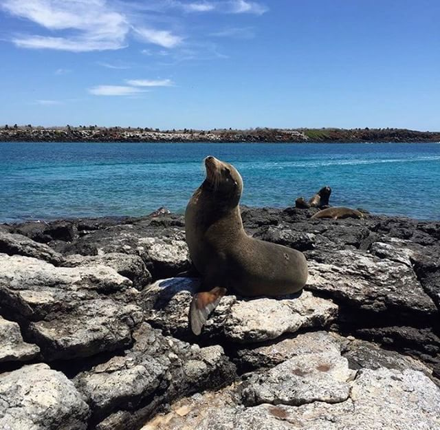 [:es]★ LOBO MARINO - GALÁPAGOS By : @aboutxenia[:en]★ LOBO MARINO - GALÁPAGOS By : @aboutxenia#LoboMarino #Galápagos #DiscoverEcuador #EcuadorPotenciaTuristica #EcuadorIsAllyouNeed #EcuadorTuristico #EcuadorAmaLavida #EcuadorPrimero #Ecuador #SoClose #LikeNoWhereElse #ViajaPrimeroEcuador #AllInOnePlace #AllYouNeedIsEcuador #PaisajesEcuador #PaisajesEcuador593 #FeelAgainInEcuador #Love #Nature_Wizards #Nature_Perfections #Wow_America #World_Shots #WorldCaptures[:]