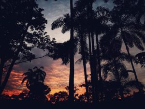 ★ Si caes,….haz como el sol que cae cada tarde y se levanta cada mañana. 🔹 🔹 🔹 __________________________ #atardecer #ocaso #elcocavivelo #elcoca #amazoniaecuatoriana #ecuadoramalavida #fotografiandoecuador #instameetec #ecuafoto #whattodoinecuador #ecuaworld_  #turistiqueros #turismo #naturaleza #ecuadorysuspaisajes #paisajesecuador593 #minturzonal2