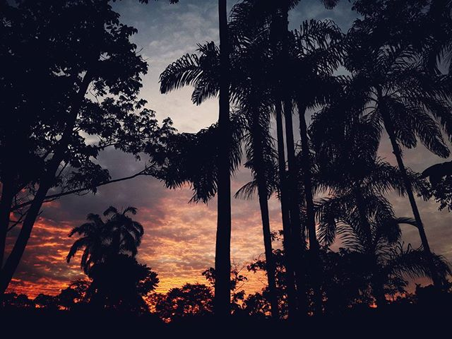 ★ Si caes,....haz como el sol que cae cada tarde y se levanta cada mañana. 🔹 🔹 🔹 __________________________ #atardecer #ocaso #elcocavivelo #elcoca #amazoniaecuatoriana #ecuadoramalavida #fotografiandoecuador #instameetec #ecuafoto #whattodoinecuador #ecuaworld_  #turistiqueros #turismo #naturaleza #ecuadorysuspaisajes #paisajesecuador593 #minturzonal2