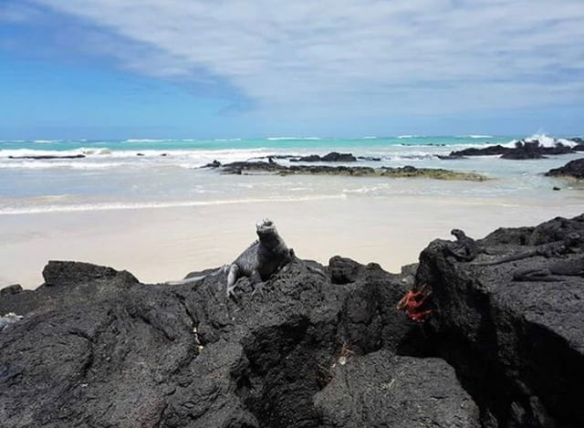 ISLAS GALÁPAGOS  By : @justlikepao  #Galápagos #EcuadorPotenciaTuri...