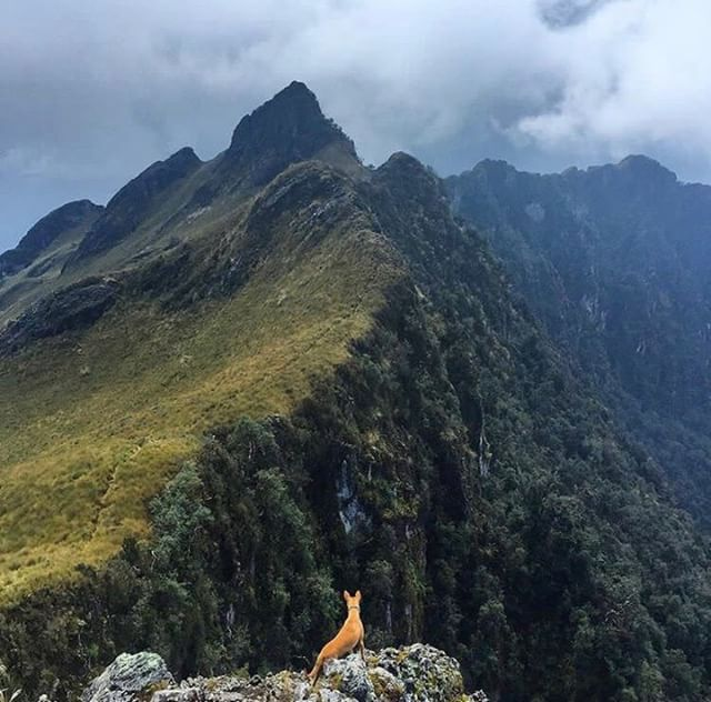 PASOCHOA - PICHINCHA  By : @tala_the_nubianhound #Pasochoa #Provin...