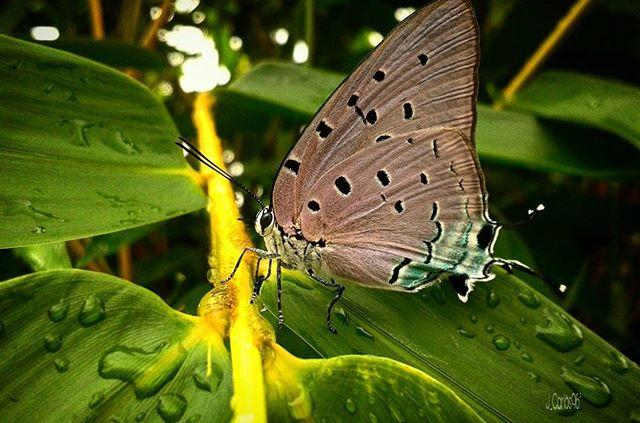 Puyo, Pastaza Foto Destacada por: @jhanzito_rc | Señora mariposa usted esta muy hermosa 😍😍. #photographer #photogr...