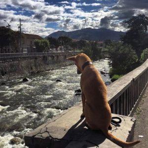CUENCA – AZUAY  By : @tala_the_nubianhound  #Cuenca #ProvinciaDeAzu…