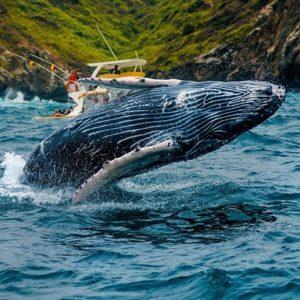 Isla Salango Foto Destacada por: @robinski__ | Un ballenato visto cerca de Salango, siempre es hermoso estar así d...