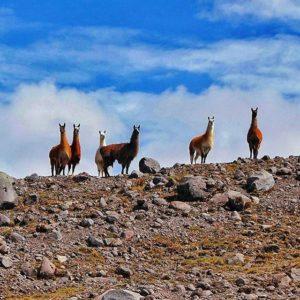Antisana Ecological Reserve 📷:@cheloutdoor #Ecua