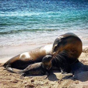 LOBOS MARINOS - GALÁPAGOS  By: @lucykcomer  #Galápagos #EcuadorEnTusOjos #EcuadorPotenci