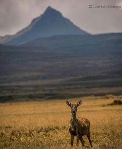 Reserva Ecológica Antisana.  Foto: @joserechigner  #FotografiandoEcuador #ecuadorpote