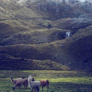 Parque Nacional El Cajas, Azuay.  Foto: @rawndall_ms