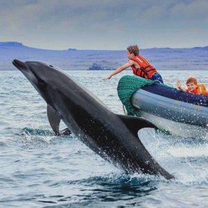 DELFÍN EN GALÁPAGOS  By: @royal.galapagos  #Galápagos #EcuadorEnTusOjos #EcuadorPotencia