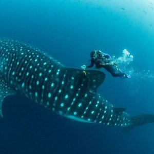 """The far north Galapagos islands are so """"sharky"""" that it actually creates a problem for us … PH: simonjpierce"""