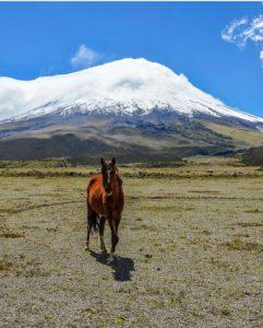 Cotopaxi.  Foto: @perspective_imaging  #FotografiandoEcuador #ecuadorpotenciaturístic