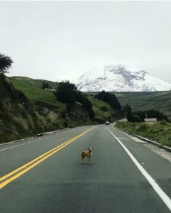 Volcán Chimborazo.  Foto: @luisterreros  #FotografiandoEcuador #ecuadorpotenciaturíst