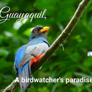 Guayaquil, Ecuador Guayaquil a birdwatcher's paradise. Hundreds of species within the reach of the city.