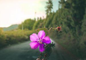 Loja, Ecuador 🌸 #landscape #landscapephotography #blossom #flowers #nature #naturaleza #naturelover