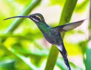 Mariposario De Mindo, Ecuador Mindo en la provincia  del Pichincha es tierra de los colibries. #colibri #mindo #pic