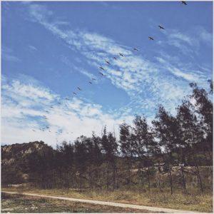 Puerto Rico, Manabi, Ecuador Siguiendo al líder. 🦇🌊 | #Vsco #VscoCam #Nature #Birds