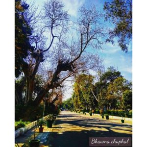 Delhi University #music #photography #blog #art #beautiful #passion #explore #reflection #journey #pea