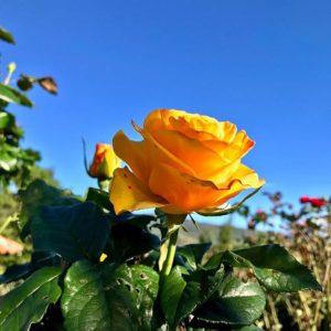 Purunuma, Loja, Ecuador 🌼 #blossom #blossoms #blossomed #flowers #flor #flores #flowersofinstagram #flowersta