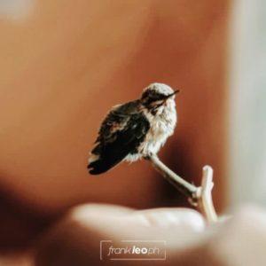 Quinde  Recuerda que toda vida es valiosa •⠀ Canon 60D + 50 mm 1.8 •⠀ #colibrí #picaf