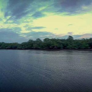 Guayaquil, Ecuador Mangroves Reserve estuary #whattodoinguayaquil #Guayaquil #yolo #birdwhatching #wildl