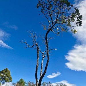 Purunuma, Loja, Ecuador Blue sky #allyouneedisecuador #landscape #landscapephotography #landscapehunter #natu