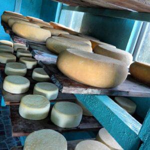 Elaboración de quesos - - - - - - - - - - - #mochileros #portraitpage #topportraits #
