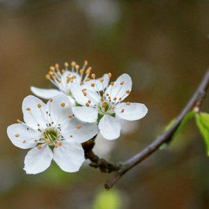 Flor del almendro. #cdmx #photography #paisaje #nature #paisajedf #paisajes #landscap
