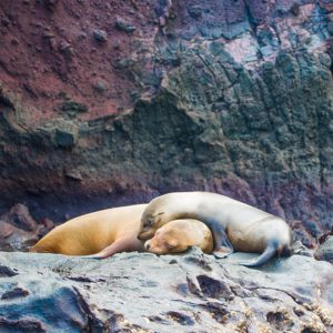 Galapagos Islands Cuddly baby sea lions and hot pink flamingos of the Galapagos! Flamingos are actually