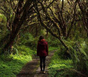 El Ángel, Ecuador  RESERVA ECOLÓGICA EL ÁNGEL – PROVINCIA DE CARCHI  #ElÁngel #ProvinciaDeCarchi #Ecuad