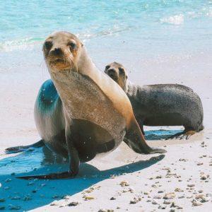 Islas Galapagos  LOBO MARINO EN GALÁPAGOS  #Galápagos #EcuadorEnTusOjos #EcuadorPotenciaTuristica  #E